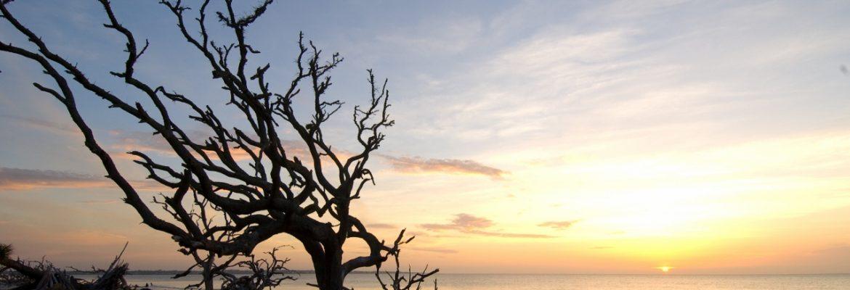 Driftwood Beach,Jekyll Island,Georgia, USA