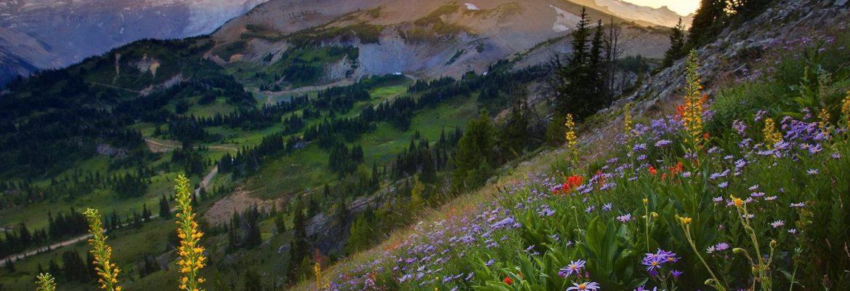 Mount Rainier National Park,Washington, USA