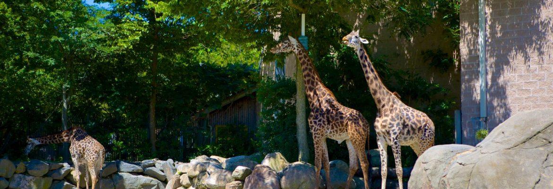 Roger Williams Park Zoo,Providence, Rhode Island, USA