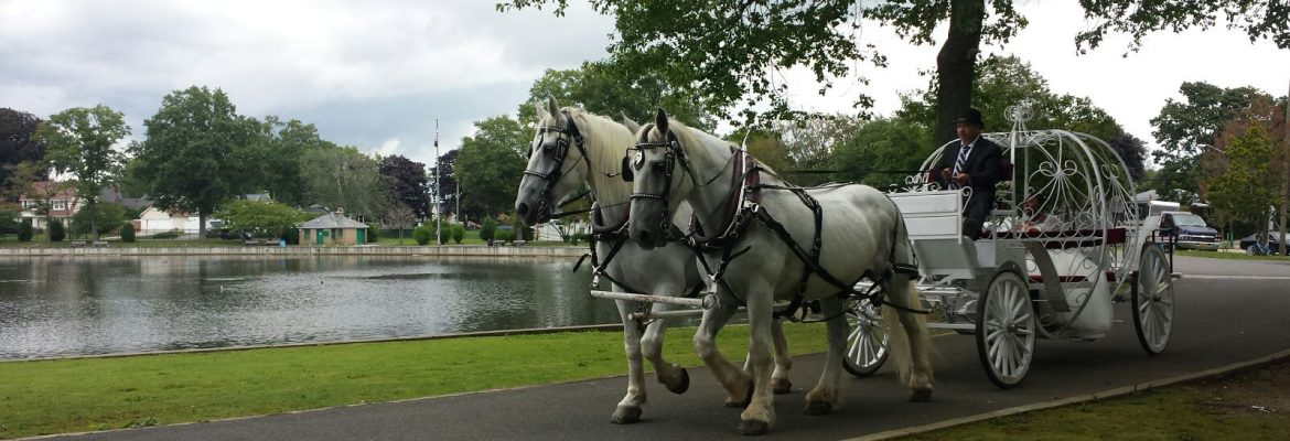 NYC Horse Carriage Rides, New York City, New York, USA
