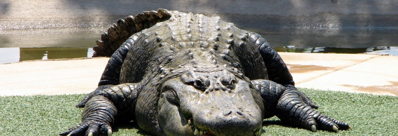 Reptile Gardens, Rapid City,South Dakota, USA