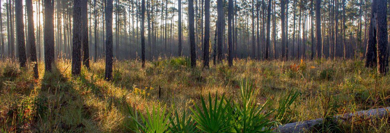 Homochitto National Forest,Mississippi, USA