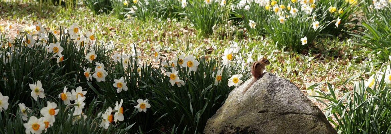 Blithewold Mansion, Gardens & Arboretum, Bristol, Rhode Island, USA