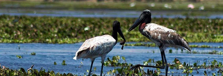 Crooked Tree Wildlife and Bird Sanctuary, Belize