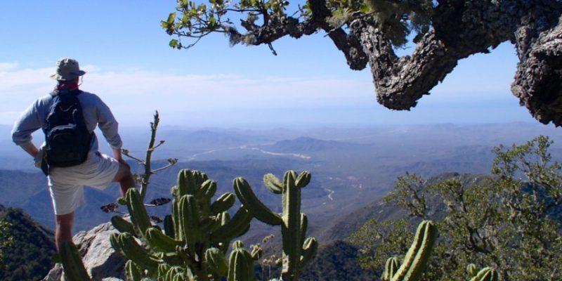 Sierra de la Laguna, Baja, Mexico