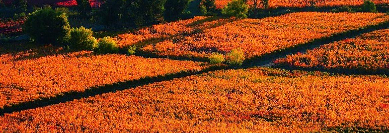 Colchagua Province, Chile