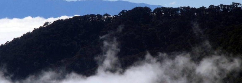 Talamanca Range La Amistad Reserves, Panama