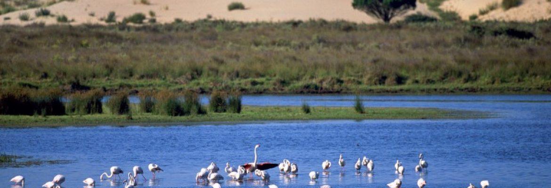 Donana National Park, Spain