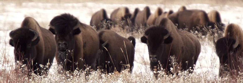 Wood Buffalo National Park, Unesco, AB, Canada