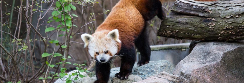 Smithsonian National Zoological Park,Washington, DC, USA