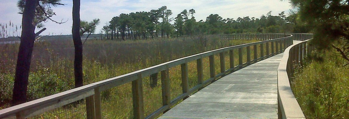 Cape Henlopen State Park,Lewes, Delware, USA