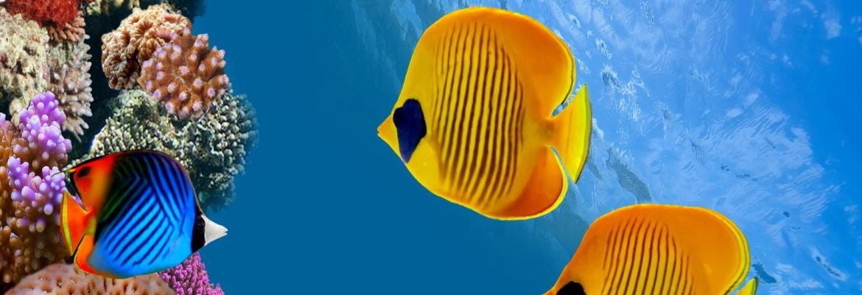 Monterey Bay Aquarium, Monterey,California, USA