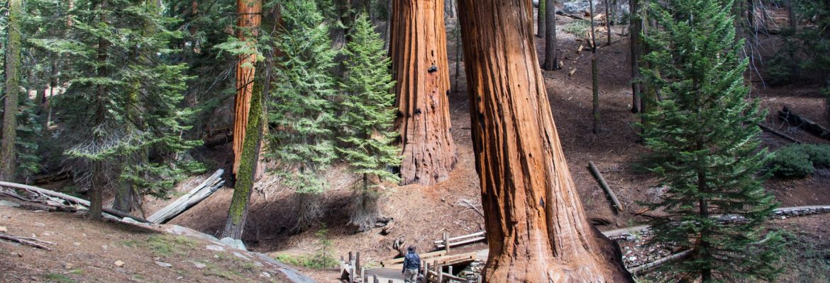 Giant Forest, Sequoia and Kings Canyon National Park