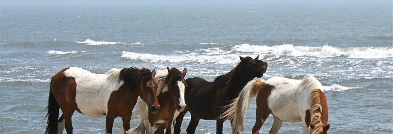 Assateague Island National Seashore, Assateague Island, Maryland, USA