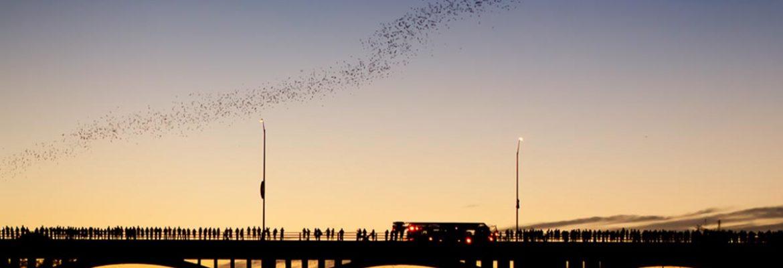 Statesman Bat Observation Center, Austin,Texas, USA