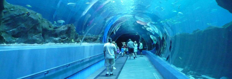 Georgia Aquarium,Atlanta,Georgia, USA