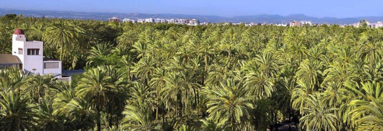 Palmeral of Elche, Unesco Site, Elche, Spain