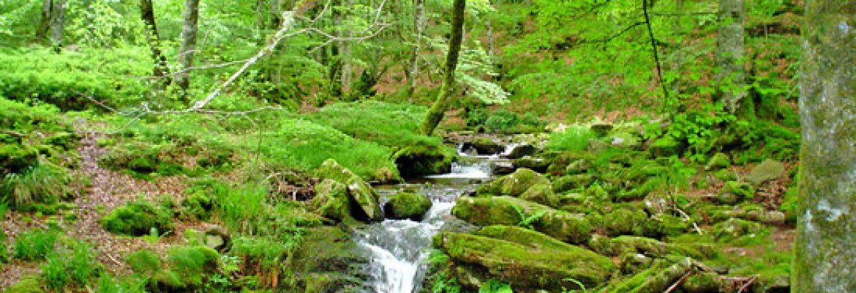 Selva de Irati,Navarre, Spain