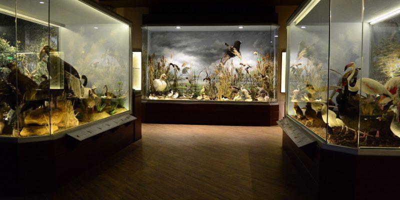 Natural History Museum of Meteora & Mushroom Museum,Kalampaka, Greece