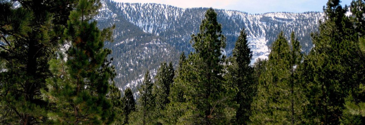 Mount Charleston, Las Vegas, Nevada, USA