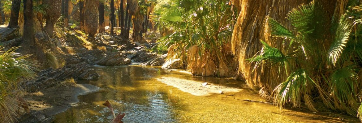 Indian Canyons, Palm Springs,California, USA