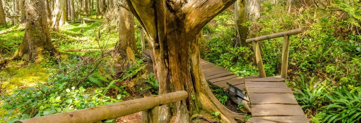 Cape Flattery Trail, Neah Bay, Washington, USA