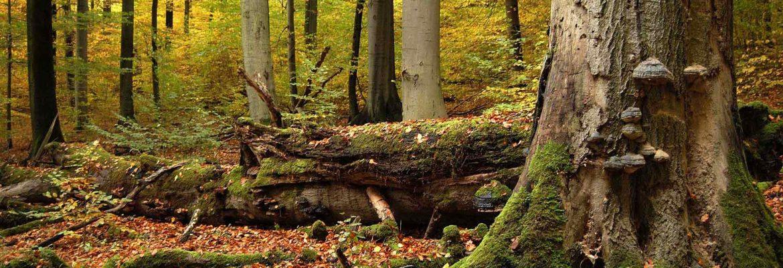 Nationalpark Hainich, Bad Langensalza, Germany