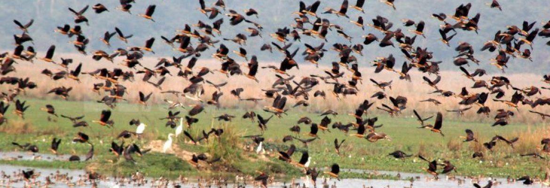 Pobitora Wildlife Sanctuary, Assam, India
