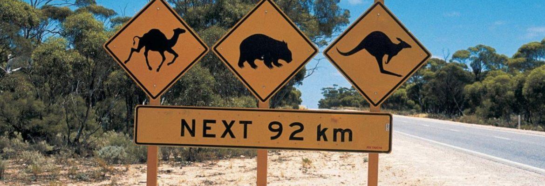 Nullarbor National Park, SA, Australia
