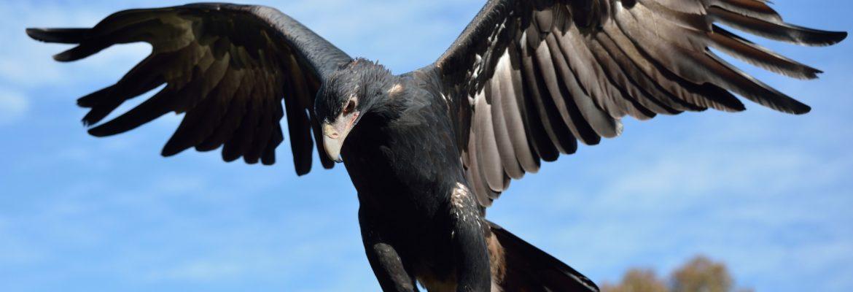 Raptor Domain, SA, Australia