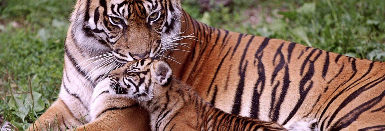 Corbett Tiger Reserve,Uttarakhand, India