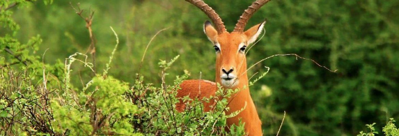 Rhodes Inyanga National Park, Zimbabwe