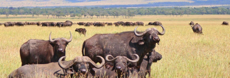 Mana Pools National Park, Unseco Site, Zimbabwe