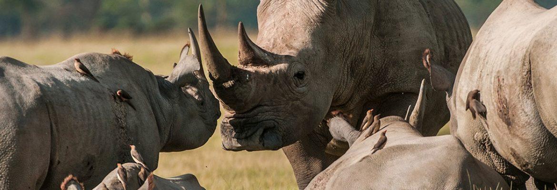 Imire Animal Park,Harare, Zimbabwe
