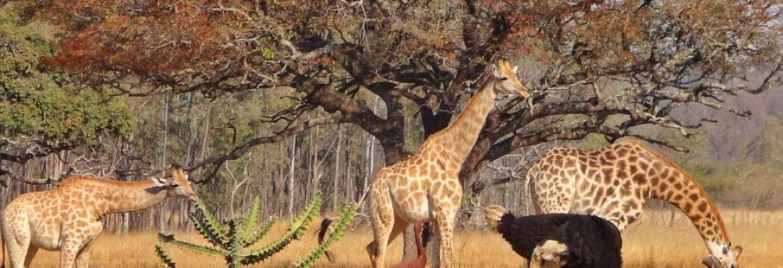 Wild Is Life, Wildlife Sanctuary, Harare, Zimbabwe