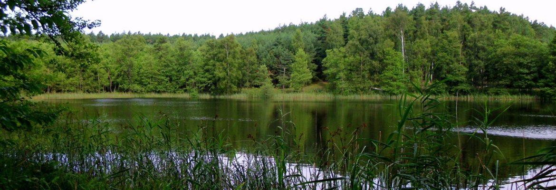 Müritz Nationalpark, Hohenzieritz, Germany