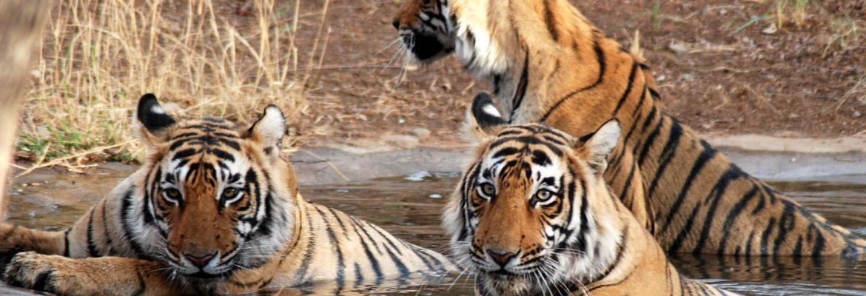 Sunderbans National Park, Unesco Site, Uttar Pradesh, india