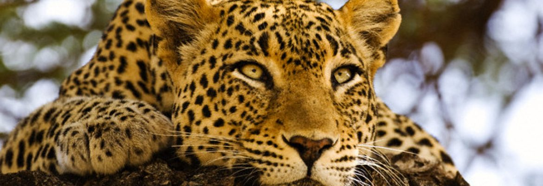 Sepahijala Wildlife Sanctuary Tripura, India
