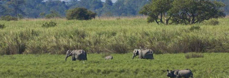 Kaziranga National Park, Unesco Site, Assam, India