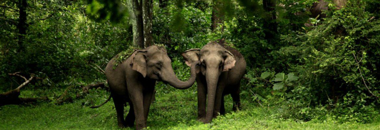 Wayanad Wildlife Sanctuary, Kerala, India